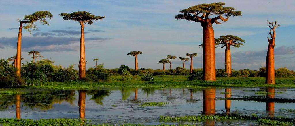 Baobabs-de-Grandidier-Madagascar-1680x720